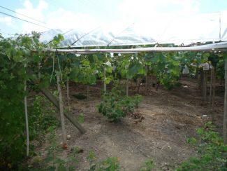 小林果樹園