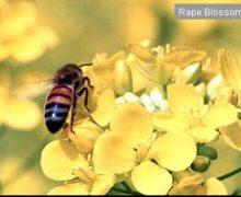 河合養蜂園