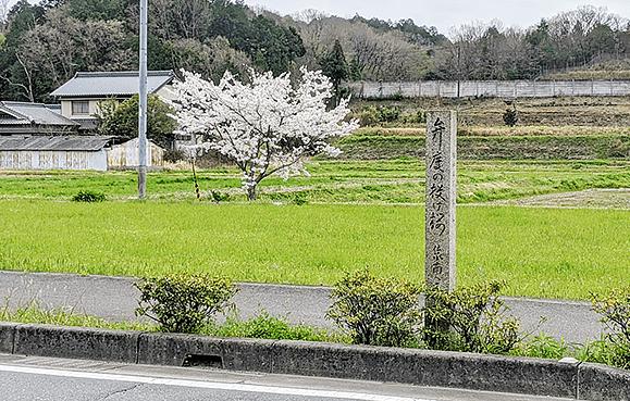 弁慶の投げ桜写真